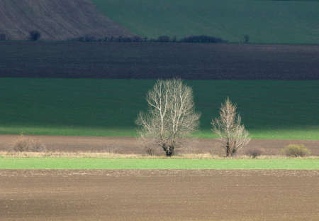cultivated land in early spring landscape. Stock Photo