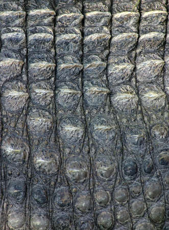 Nearly picture from the leather of the crocodile Stock Photo