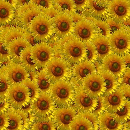 background texture of flowers from the sunflower Stock Photo