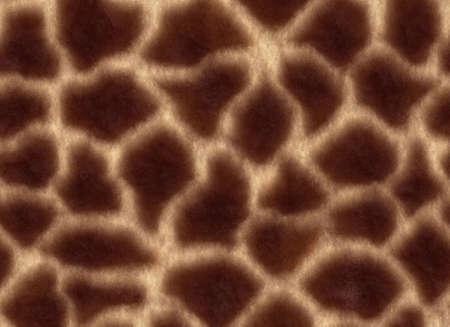 The giraffe's skin texture. Stock Photo - 5997803