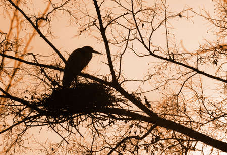 at dusk the birds are sitting on the nest Stock Photo