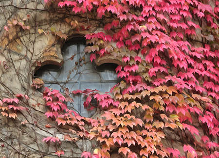 Church window with red ivy around digital painting.