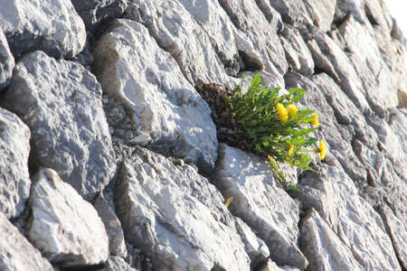 Green plants growing in the crevices of stone walls.