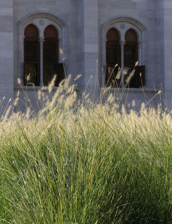 Tall grass with monumental windows in background.