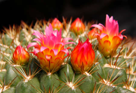 Close-up of a cactus flower in the desert. Stock Photo