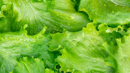 Fresh cut leaves of green lettuce texture, top view Zdjęcie Seryjne - 121875441