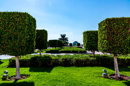Neatly trimmed cubic bushes in Abu Dhabi near the mosque