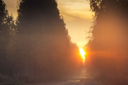 Sunrise over the road in the autumn forest