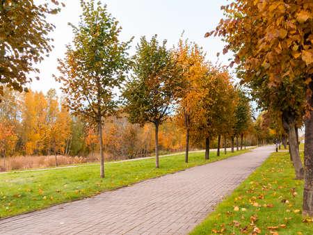 Tiled path in the autumn park at sunset, autumn landscape