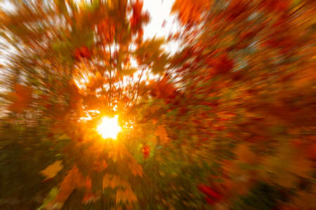 Suns rays shine through the autumn foliage. Blurred Background