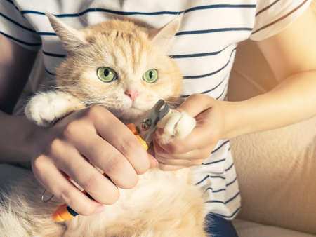 Young girl cuts the claws of a beautiful cream kitten with green eyes