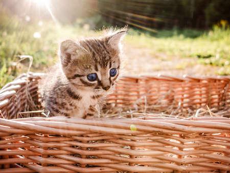 A cute little black kitten peers out of the basket Stockfoto