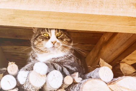 A large cat sits on the wood under the roof.
