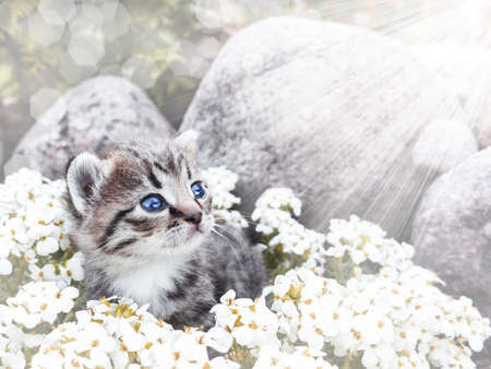 Cute little kittCute little kitten sitting among the white flowers and stone 스톡 콘텐츠
