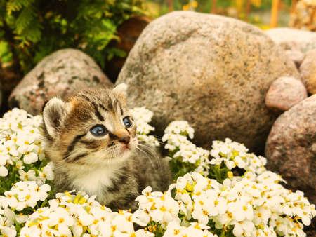 Cute little kittCute little kitten sitting among the white flowers and stone Stockfoto