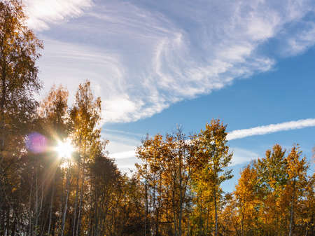 Tops of yellowed trees against a blue sky and clouds on a sunny autumn day