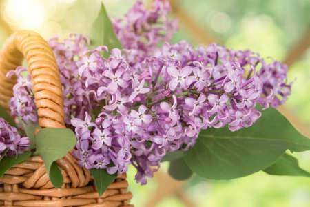 Basket with a bouquet of lilac flowers in the summerhouse in the garden close up
