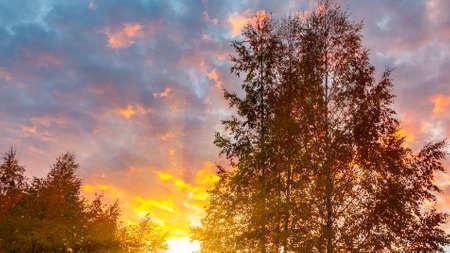 Autumn treetops against a cloudy sky at sunset. Background Reklamní fotografie