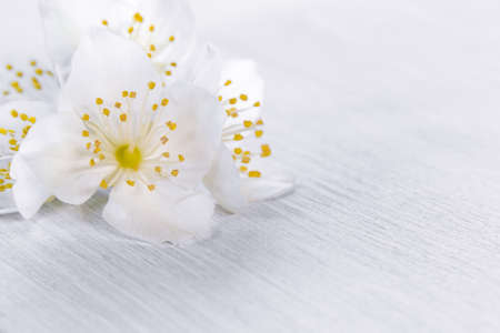 flowers of philadelphus somewhere called jasmine or mock orange on a white wooden table