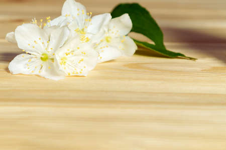 flowers of philadelphus somewhere called jasmine or mock orange on wooden table