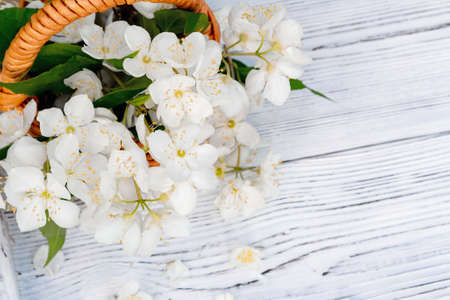 Basket with Flowers of philadelphus somewhere called jasmine or mock orange on a white wooden tray outdoors in summer Banco de Imagens
