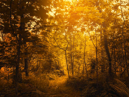 Warm autumn scenery in a forest, with the sun casting beautiful rays of light through trees Banco de Imagens