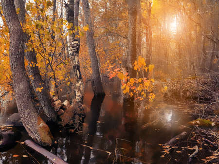 Autumn in the flooded forest at sunset