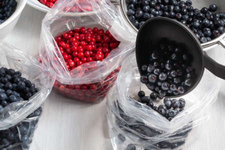 Process of preparing berries for freezing - folding into packages Zdjęcie Seryjne