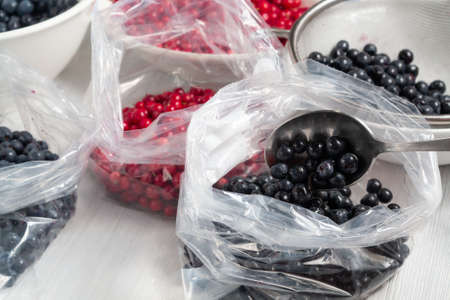 Process of preparing berries for freezing - folding into bags Zdjęcie Seryjne