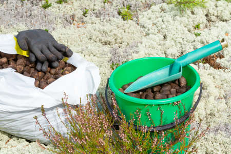 Elk droppings picked in a bag and bucket in the forest Imagens