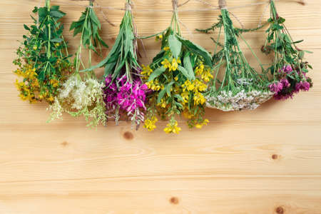 Bundles of medicinal herbs dried near a light wooden wall, alternative medicine and herbal treatment concept, copy space, place for text, background
