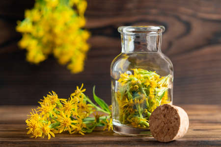 Concept of homeopathy and herbal treatment - solidago virgaurea know as goldenrod in a bottle