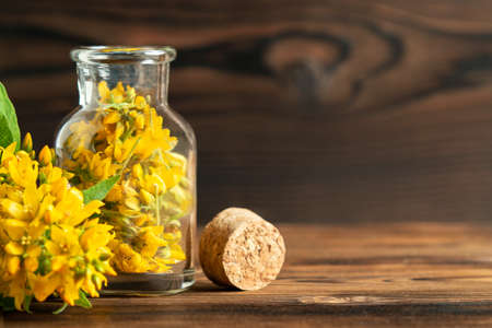 Concept of homeopathy and herbal treatment - solidago virgaurea know as goldenrod in a bottle, copy space, place for text Stock Photo