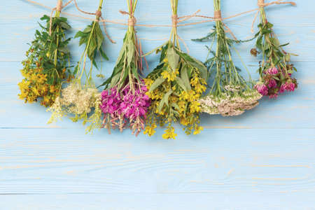 Bundles of medicinal herbs dried near a blue wooden wall, alternative medicine and herbal treatment concept, copy space, place for text, background