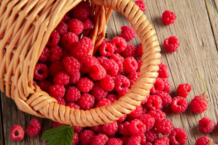 Ripe forest raspberries scattered from a small basket on a wooden table, top view.