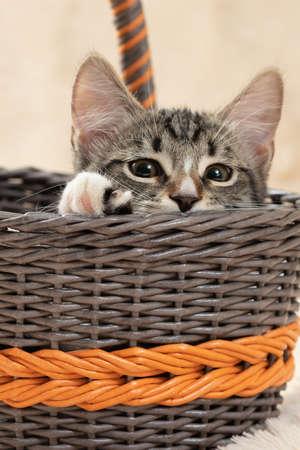 Cute gray tabby kitten sits in a wicker basket, vertical image Stok Fotoğraf