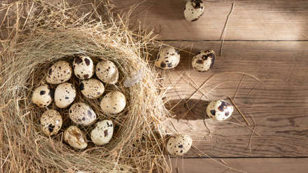 Several quail eggs in a decorative nest made of straw on a wooden table. copy space, horizontal banner, flatlay