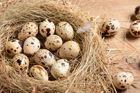 Several quail eggs in a decorative nest made of straw on a wooden table close-up, flatlay