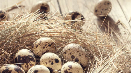 Several quail eggs in a decorative nest made of straw on a wooden table close-up, horizontal banner Stok Fotoğraf