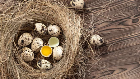Several quail eggs in a decorative nest made of straw on a wooden table, copy space, horizontal banner, flatlay