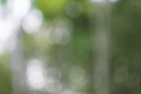 Natural blurred background. Green forest image defocused