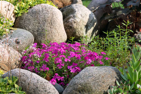 Various perennial plants in a small rockery in a summer garden.