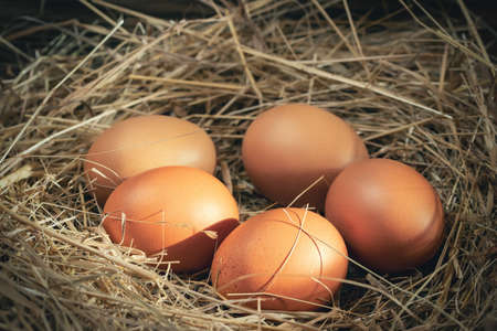 Several raw fresh chicken eggs in a nest of hay on a wooden background. Banque d'images
