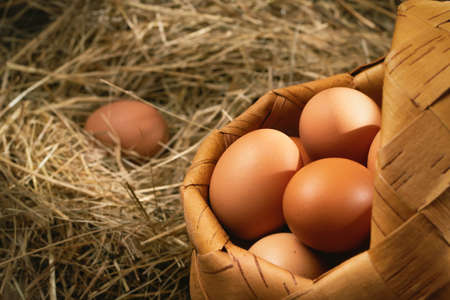 Fresh brown chicken eggs in a basket and in a nest from hay in a barn. Banque d'images