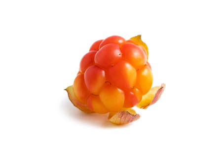 One fresh ripe cloudberry isolated on white background 免版税图像