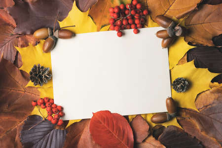 Blank sheet of paper with place for text on colorful autumn leaves. Template for design or postcards