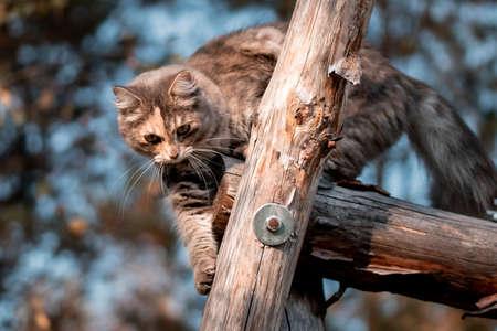 Cute gray cat on a walk climbs on a wooden structure 免版税图像