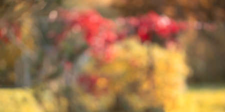 Natural autumn blurred background, lush fall foliage in the garden