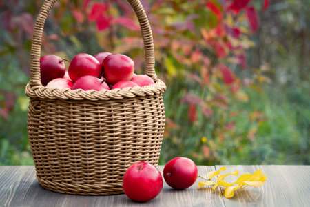 Organic ripe red apples in a wicker basket on a garden table 免版税图像