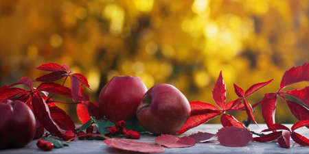 Autumn composition with apples and fallen leaves on a background of golden foliage